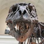 ポイントタウンに「恐竜発掘!ホリホリランド」が追加されたので攻略してみた