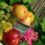 フルーツメールスマホ版「ポケットフルーツ」は美味しいのか?