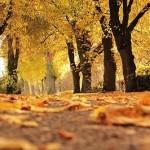 モッピークエスト「秋の収穫キャンペーン」なんと獲得コインが3倍!!