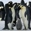 ペンギン小