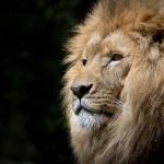 「ヒロセ通商 LION FX」初回ログインから入金方法、取引完了までの詳しいやり方