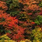 【i2iポイント】新規会員登録後最大2,420円が貰える「秋のスタートダッシュキャンペーン」と「ウェルカムキャンペーン」