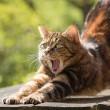 威嚇するネコ