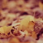 【ハピタス】抽選で10,000円分のポイントが当たる!!「秋のポイント還元キャンペーン」
