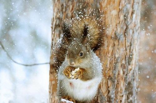 リス雪の中